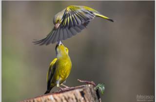 Kleine Vogel zum Besucherzentrum_fotos von Alessandro Laporta