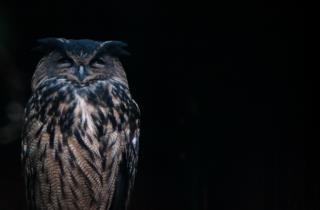 Der uhu Symbol der Reserve_fotos von Marco Giordano